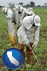 california workers spraying insecticide on plants