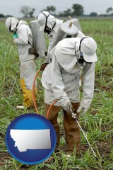 montana workers spraying insecticide on plants