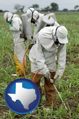 texas workers spraying insecticide on plants