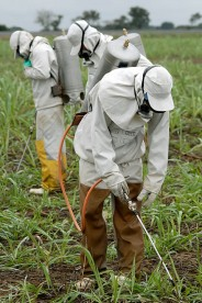workers spraying insecticide on plants